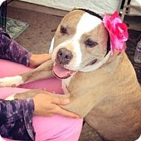 Adopt A Pet :: Zola - Marina del Rey, CA