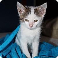 Adopt A Pet :: Daisy Duke - Phoenix, AZ