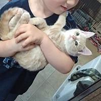Adopt A Pet :: Deuce - Somerville, TX
