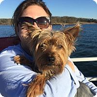 Adopt A Pet :: Beaux - Alpharetta, GA