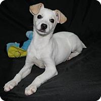 Adopt A Pet :: Spirit - Lufkin, TX