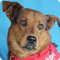 Adopt A Pet :: Teddy - Minneapolis, MN