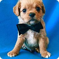 Adopt A Pet :: Kennedy - Irvine, CA