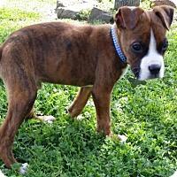 Adopt A Pet :: Hudson - Hurst, TX