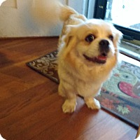 Adopt A Pet :: Maple - Warrenton, NC