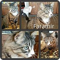 Adopt A Pet :: Faramir - Ennis, TX