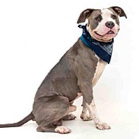 Adopt A Pet :: BAIRON - Orlando, FL