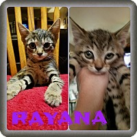 Adopt A Pet :: Rayana - Warren, MI