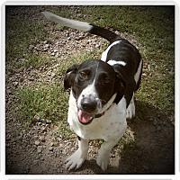 Adopt A Pet :: DOMINO - Medford, WI