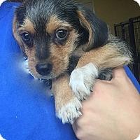 Adopt A Pet :: Big - Sparta, NJ