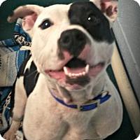 Adopt A Pet :: Inca - Muskegon, MI
