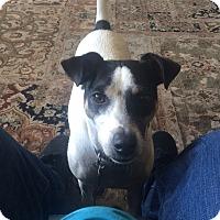 Adopt A Pet :: Winston in San Antonio - Austin, TX