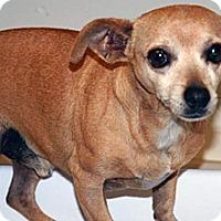 Adopt A Pet :: 317808 - Wildomar, CA