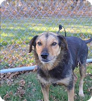 Terrier (Unknown Type, Medium) Mix Dog for adoption in Delaware, Ohio - Honey