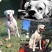 Adopt A Pet :: Roxy - Texarkana, TX