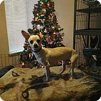 Adopt A Pet :: Tucker - Denver, CO