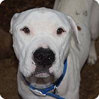 Adopt A Pet :: BENTLEY - Milwaukee, WI