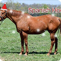 Adopt A Pet :: Holiday Special-Spanish Hound - Nicholasville, KY