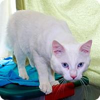 Adopt A Pet :: Carl - Orange, CA