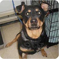 Adopt A Pet :: Stella - Surrey, BC