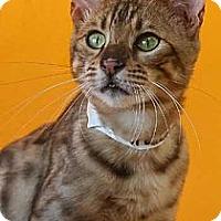 Adopt A Pet :: Lakota - Davis, CA