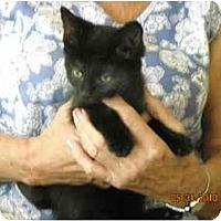 Adopt A Pet :: Benjamin (Ben) - Riverside, RI