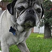Adopt A Pet :: Rex - Austin, TX