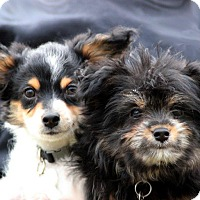 Adopt A Pet :: Jax & Max - South Amboy, NJ