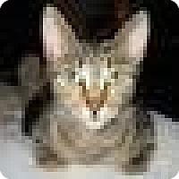 Adopt A Pet :: Mona Lisa - brewerton, NY