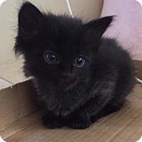 Adopt A Pet :: Rue - Phoenix, AZ