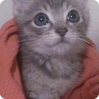 Adopt A Pet :: Sabrina - Lawrenceville, GA