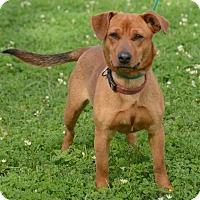 Adopt A Pet :: Abigail - Charlemont, MA