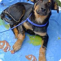 Adopt A Pet :: Magnum needs love - Sacramento, CA