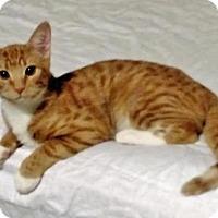 Adopt A Pet :: Bo Duke - Alexandria, VA
