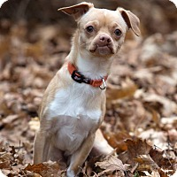 Adopt A Pet :: Bean - Drumbo, ON