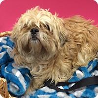 Adopt A Pet :: Cupid - Decatur, AL