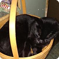 Adopt A Pet :: Paulie - Benton, PA