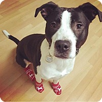 Adopt A Pet :: Leena - Pittsburgh, PA