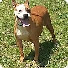 Adopt A Pet :: Zita