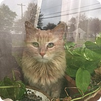 Adopt A Pet :: Rose Courtesy Post - Absecon, NJ