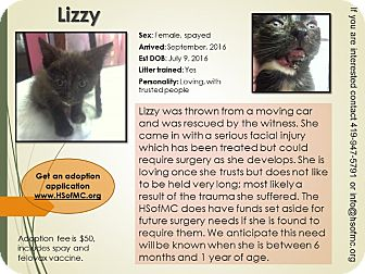 Domestic Shorthair Kitten for adoption in Mount Gilead, Ohio - Lizzy