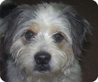 Terrier (Unknown Type, Medium) Dog for adoption in Longview, Washington - Rowdy