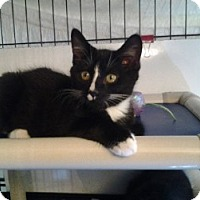 Adopt A Pet :: Pepe - Middletown, CT