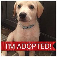 Adopt A Pet :: Jay - Regina, SK