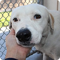 Adopt A Pet :: Landon - Allison Park, PA
