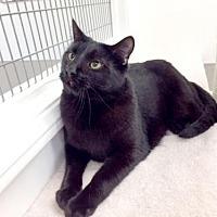 Adopt A Pet :: Armando - Woodland Hills, CA