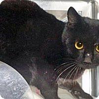Adopt A Pet :: 334478 - Wildomar, CA