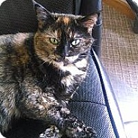 Adopt A Pet :: Jenna (lap cat) - Sterling Hgts, MI