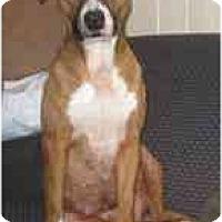 Adopt A Pet :: Brianna - Antioch, IL