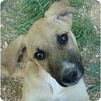 Adopt A Pet :: Randy - Staunton, VA